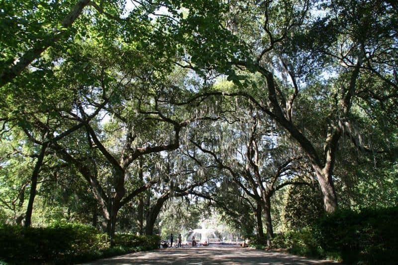 Trees in Forsyth Park, Savannah