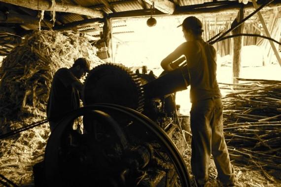 Grinding sugar cane in Trapiche, Costa Rica