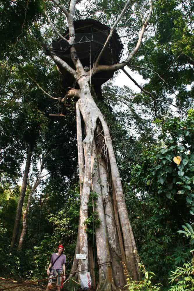 Gibbon Experience treehouse, Laos