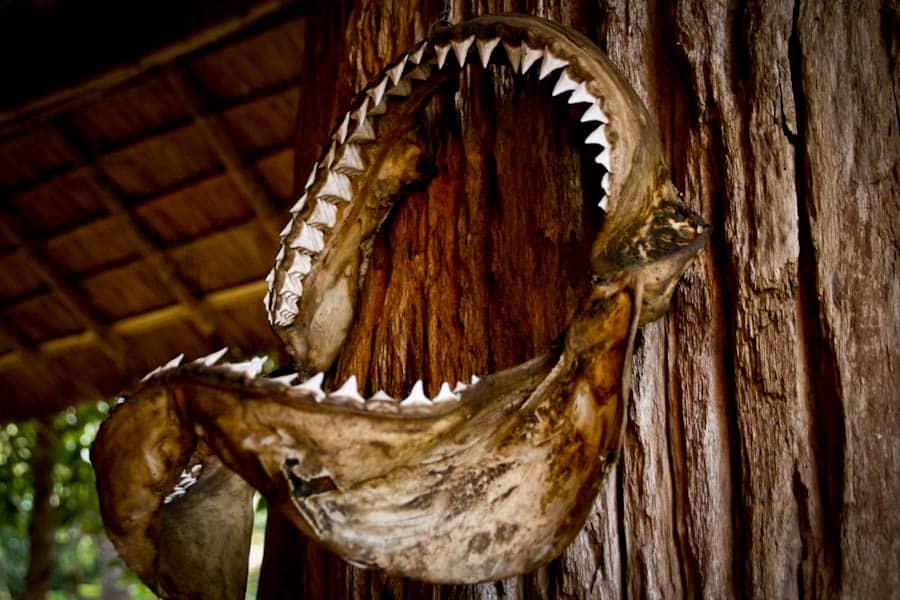 Teeth, Black House, Chiang Rai