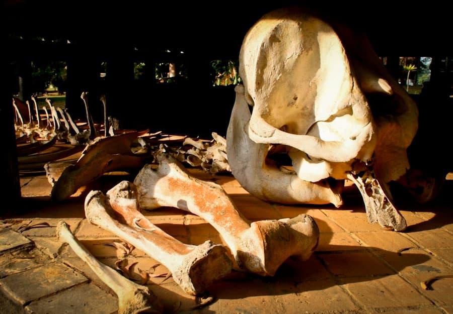 Elephant skeleton, Black House, Chiang Rai