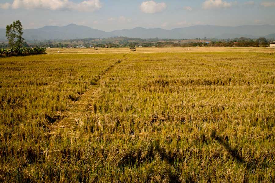 Field in northern Thailand