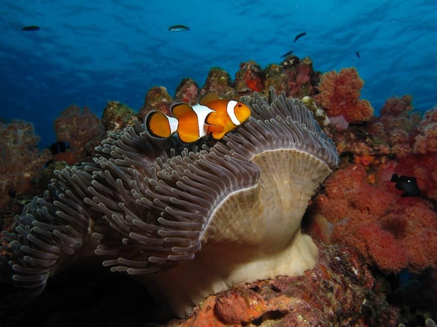 Clownfish. Photo by Natasha Lambelin, Liquid Lense