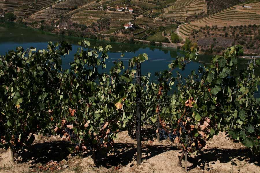 Douro Valley 15