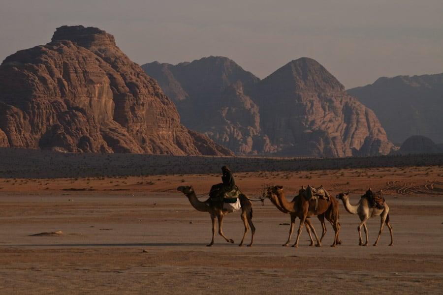 Bedouins on camels in Wadi Rum