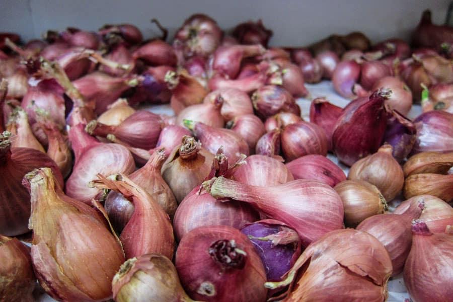 Huge garlic cloves