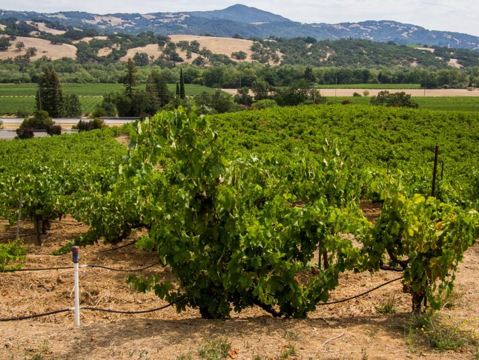 J Rickards winery, Sonoma