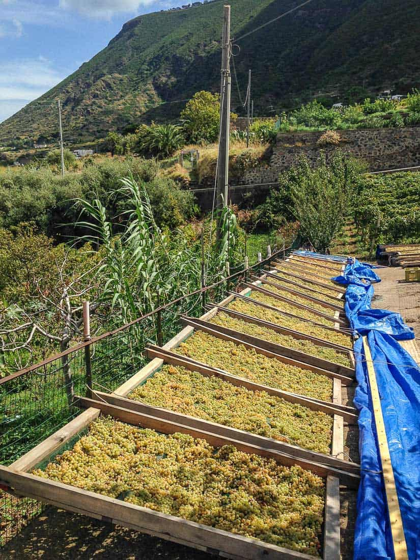 Malvasia grapes drying, Malfa, Salina