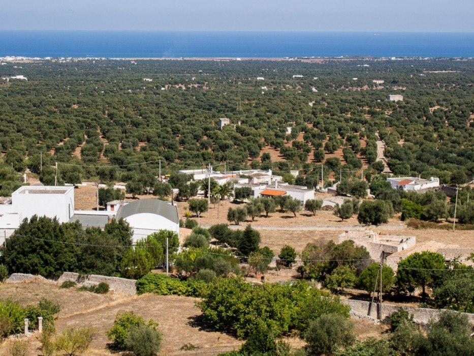 View of olive trees and the Adriatic sea from Ostuni
