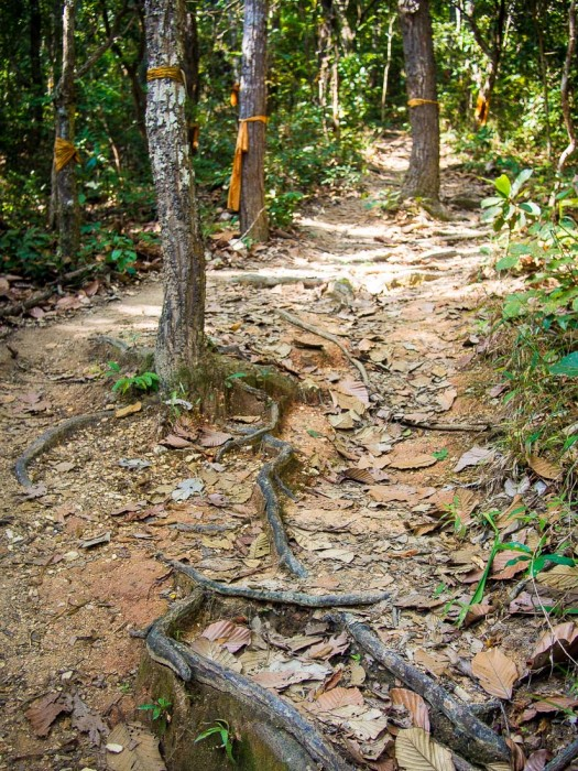 Running while travelling-Chiang Mai trail run to Wat Pha Lat