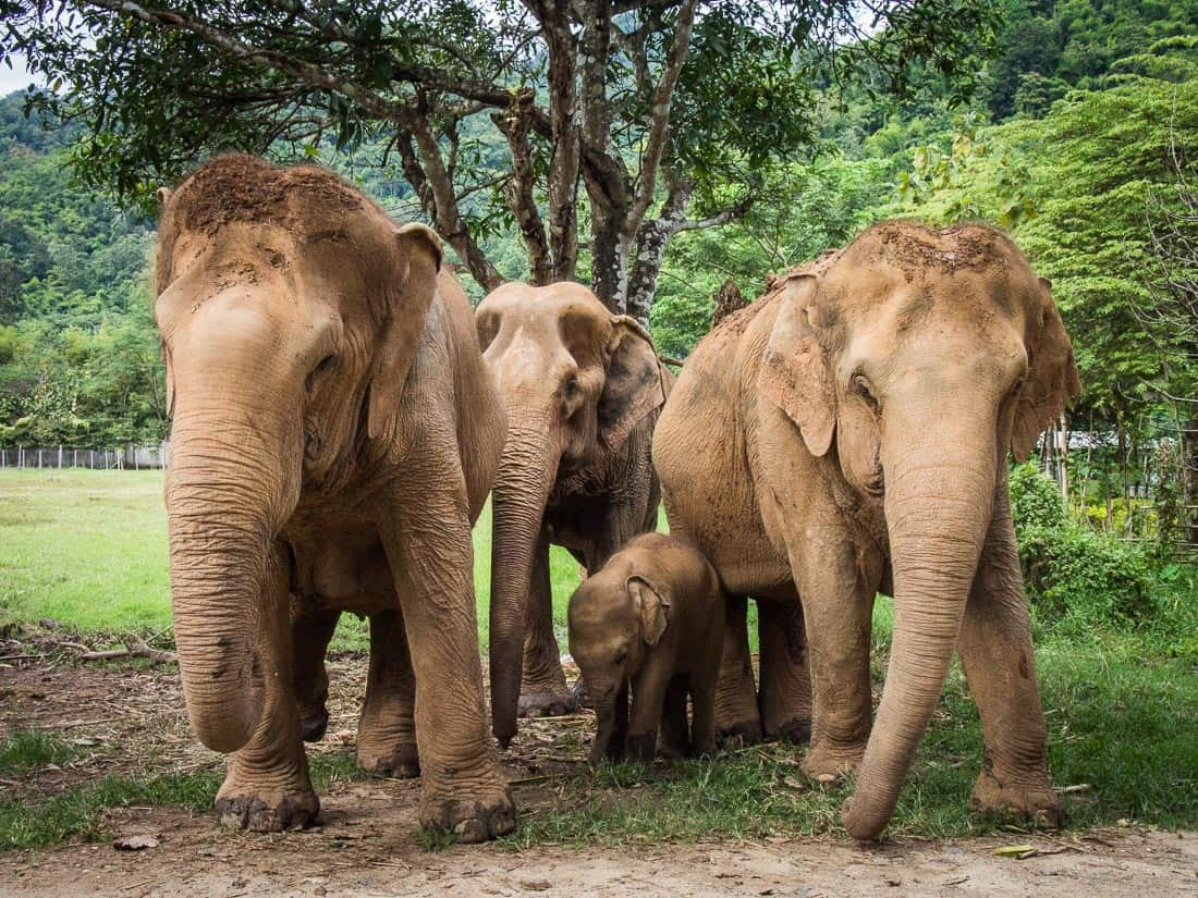 Image Gallery elephants thailand
