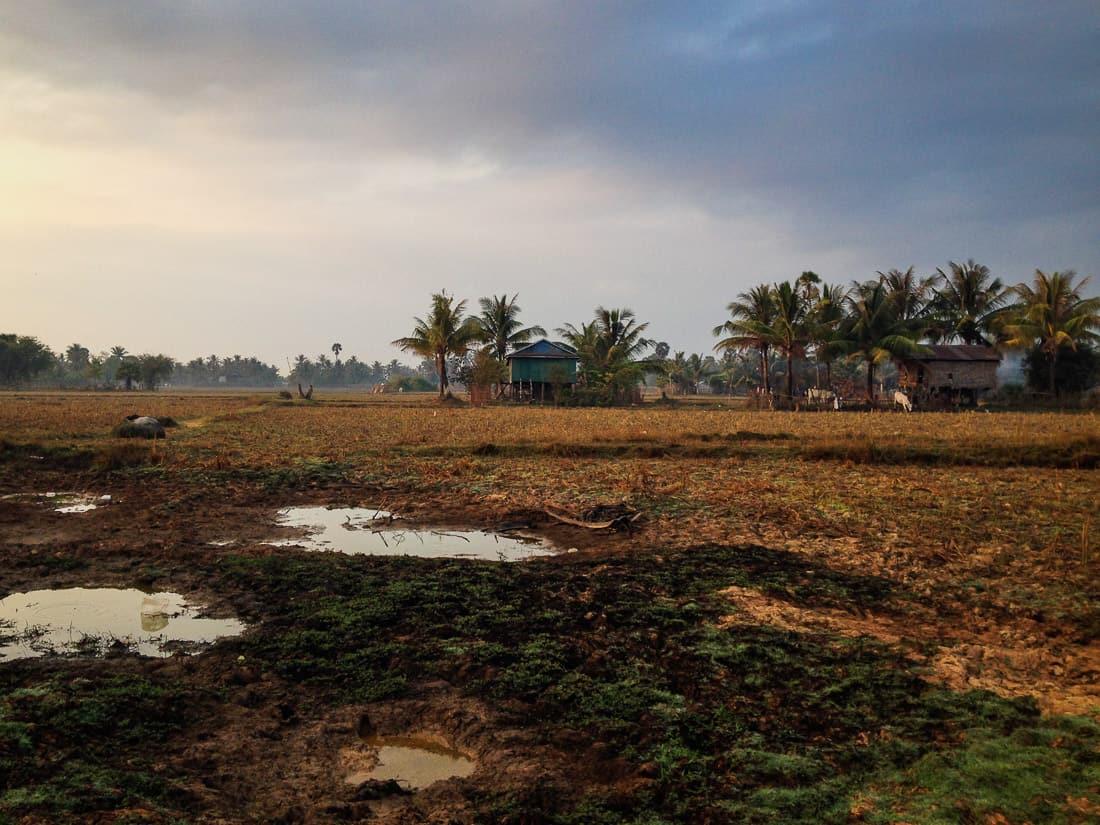 Rice paddies outside Kampot