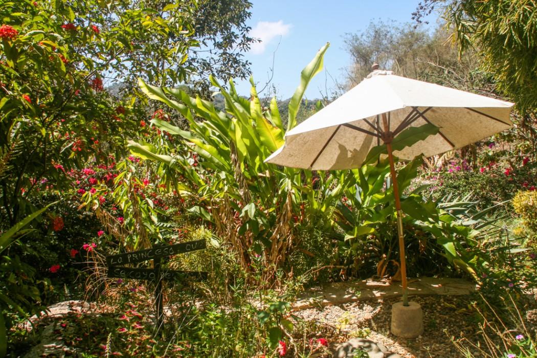 The garden of our San Pancho casita