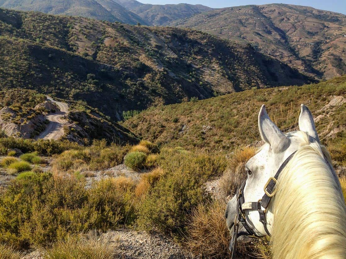Horse and Housesitting in the Alpujarras, Spain