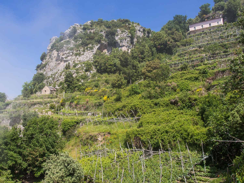 Vine terraces on Path of the Gods hike, Amalfi Coast