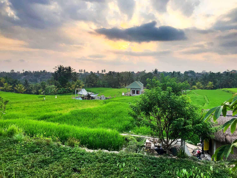 Ubud digital nomad life - Rice paddy view from Sari Organik