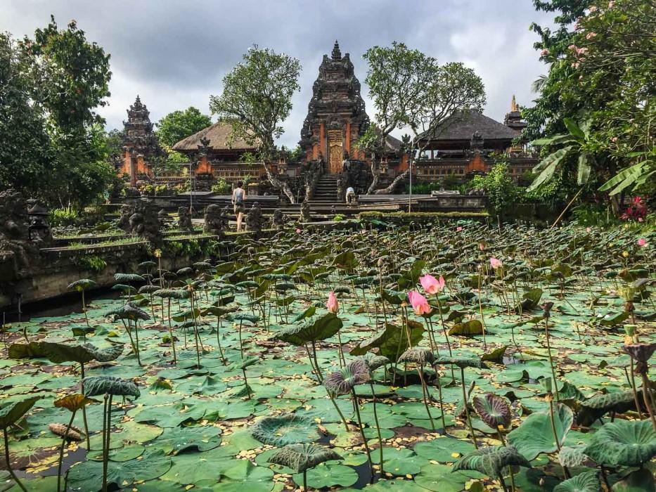The Lotus pond at Saraswati temple, Ubud