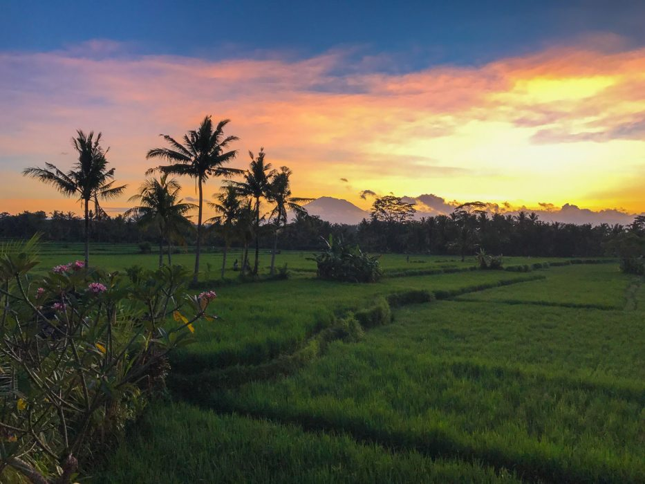 Ubud rice fields and Mt Agung at sunrise