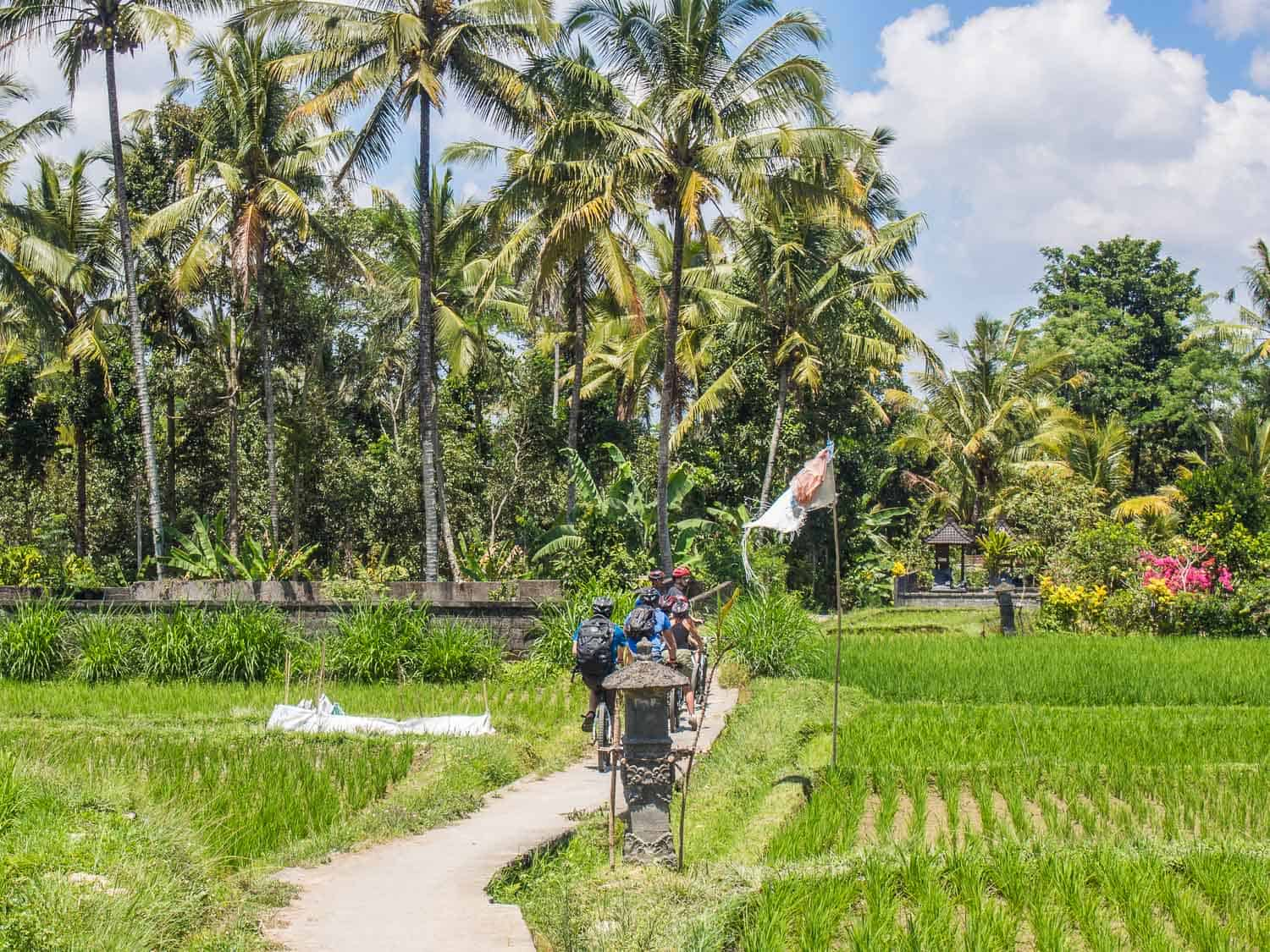 Eco Cycling Tour Bali review -Things to Do in Ubud