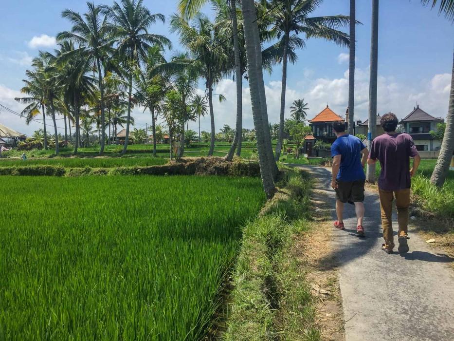 Things to do in Ubud -rice fields walk