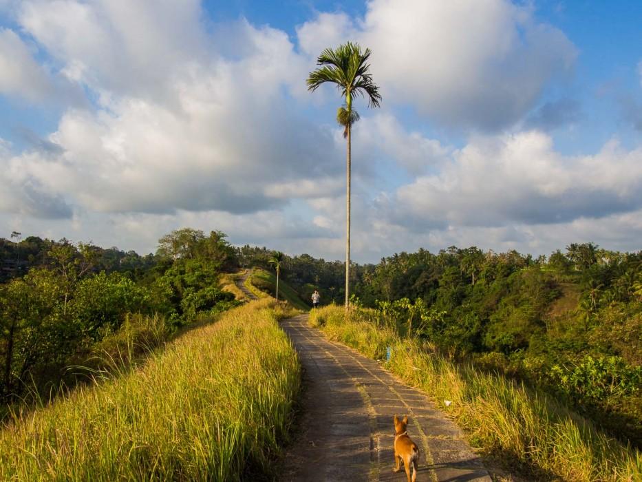 Things to Do in Ubud - Campuhan Ridge Walk