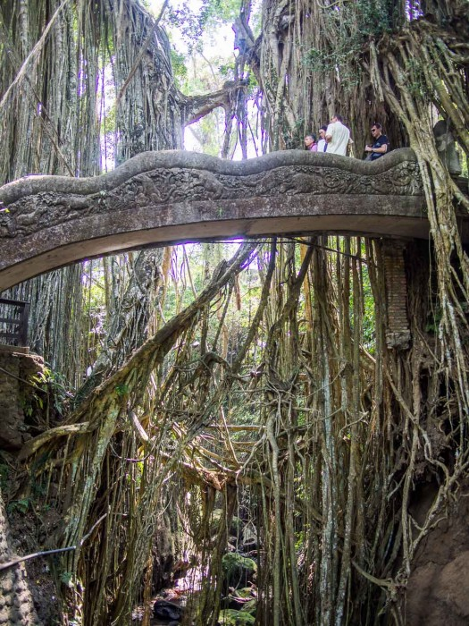 Things to Do in Ubud - monkey forest