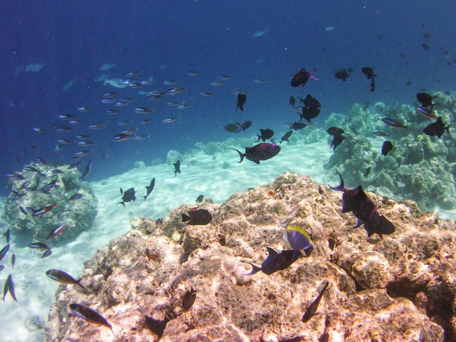 Reethi Beach Resort snorkelling in the Maldives