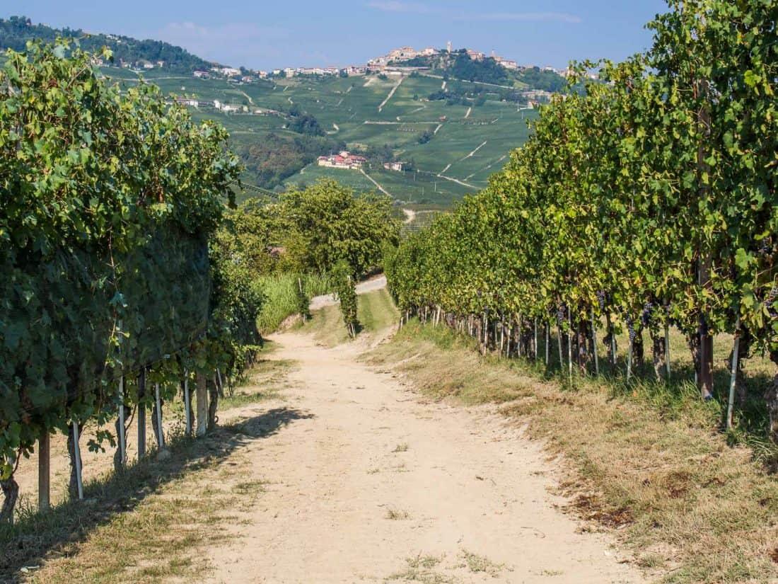 Vineyard hiking trail to Barolo from Castiglione Falletto in Piemonte, Italy