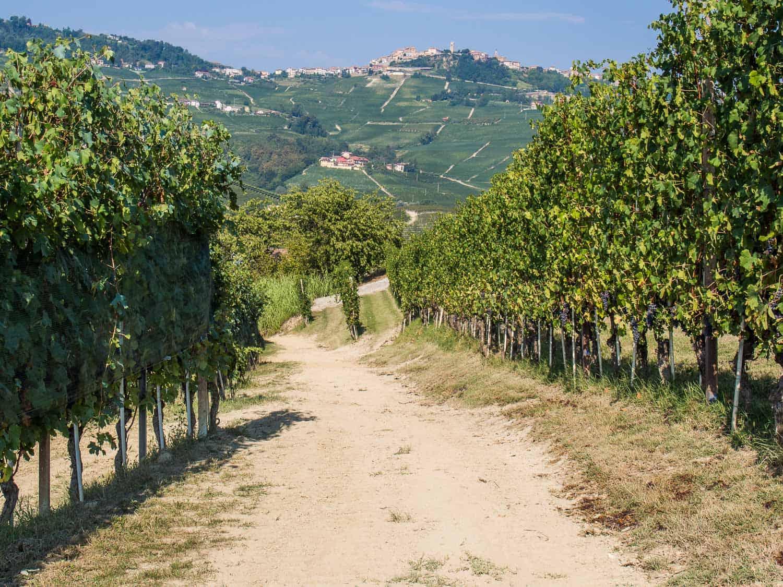 Langhe, Piemonte travel guide