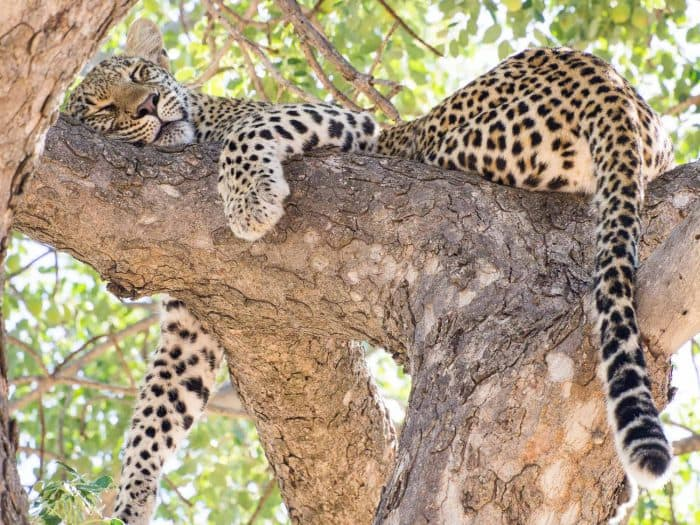 Umlani Bushcamp review: a rustic eco-lodge in Greater Kruger, South Africa