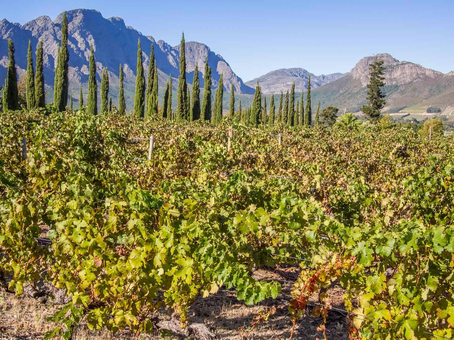 In our Franschhoek travel guide discover the best things to do in Franschhoek, which gourmet restaurants to choose, where to stay and more