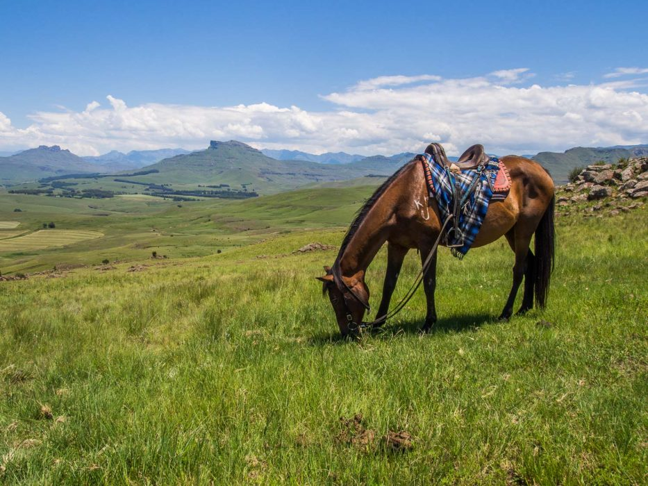 Taking a break on a horse riding trip in Underberg in the Drakensberg Mountains
