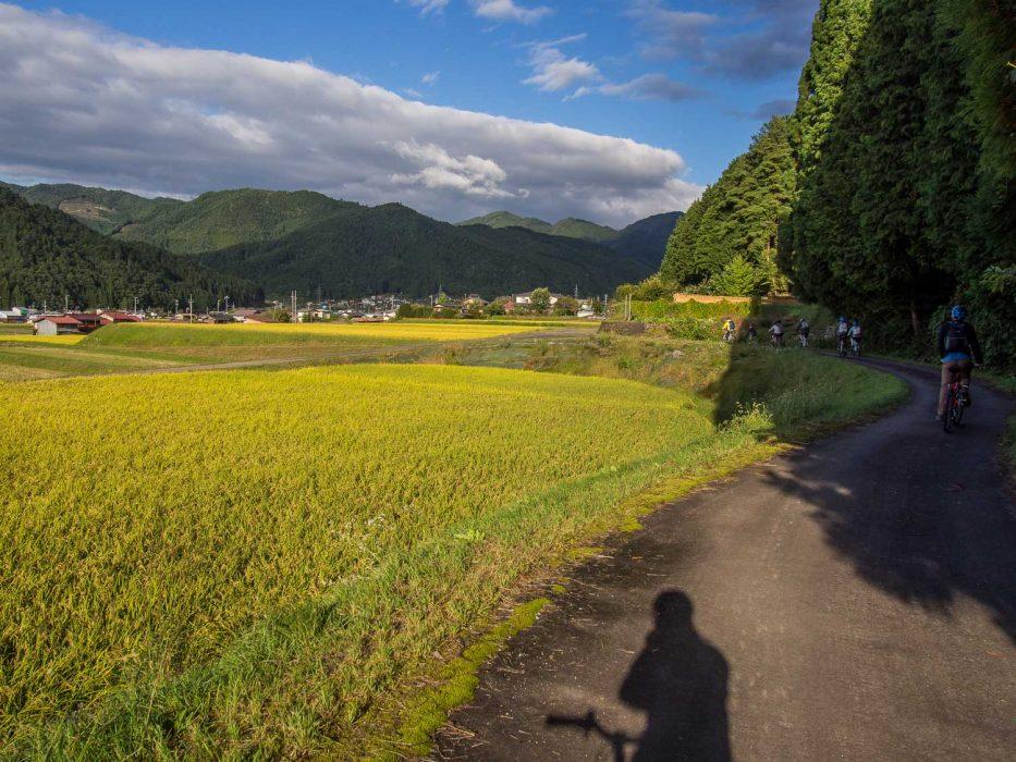Cycling past golden rice fields with Satoyama Experience in Hida Furukawa