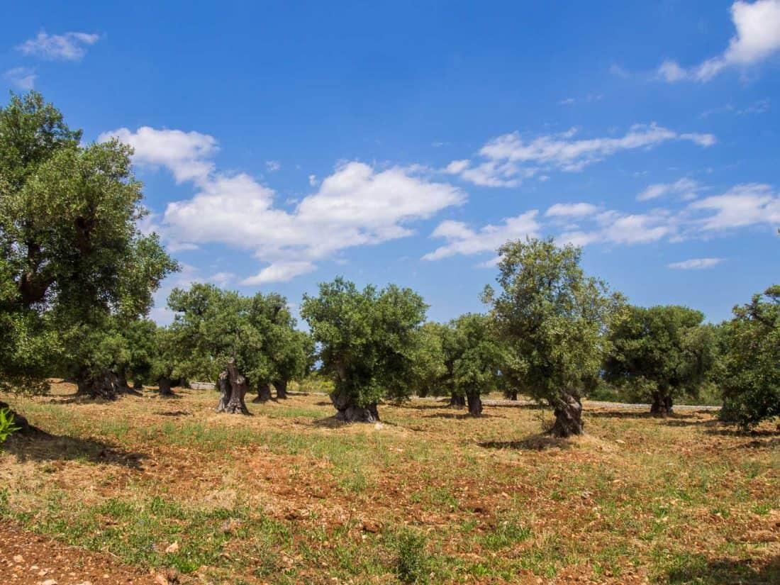 Masseria Il Frantoio grounds in Ostuni, Puglia