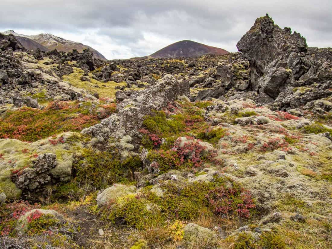 Berserkjahraun lava fields, one of the stops on our Iceland road trip