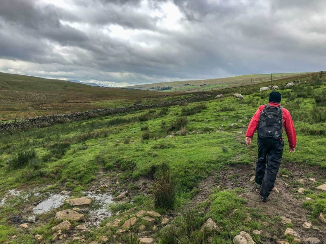 Crossing the moors on the Dales Way near Cam Houses