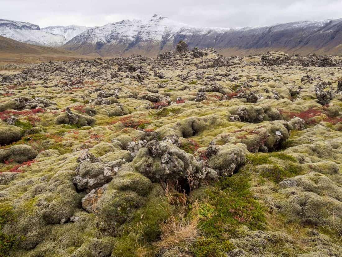 Berserkjahraun lava fields with snowy mountains on Snaefellsness Peninsula, Iceland