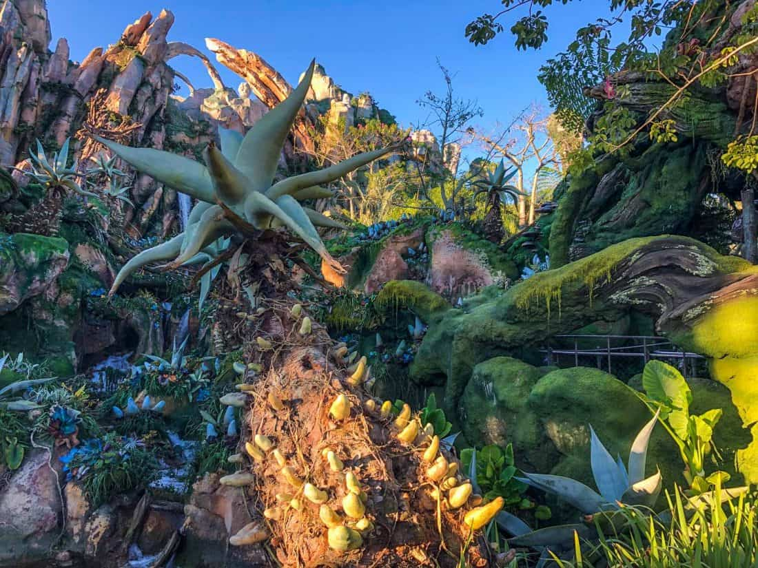 The view in the queue for Avatar Flight of Passage, one of the best things to do at Disney World Florida