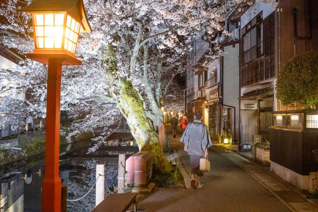 Visitor to Kinosaki Onsen in kimono at night by the cherry blossom lined canal
