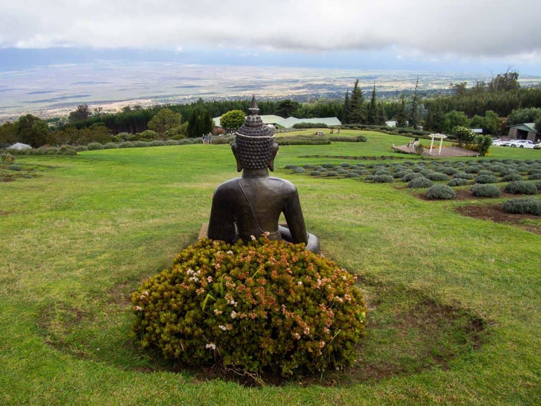 Buddha state overlooking lavender fields at Alii Lavender Farm in Maui Upcountry