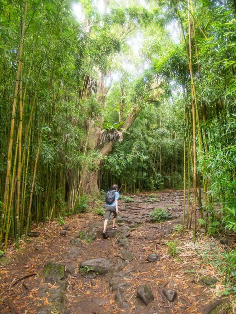 Simon hiking through a bamboo grove on the Pipiwai Trail near Hana, Maui