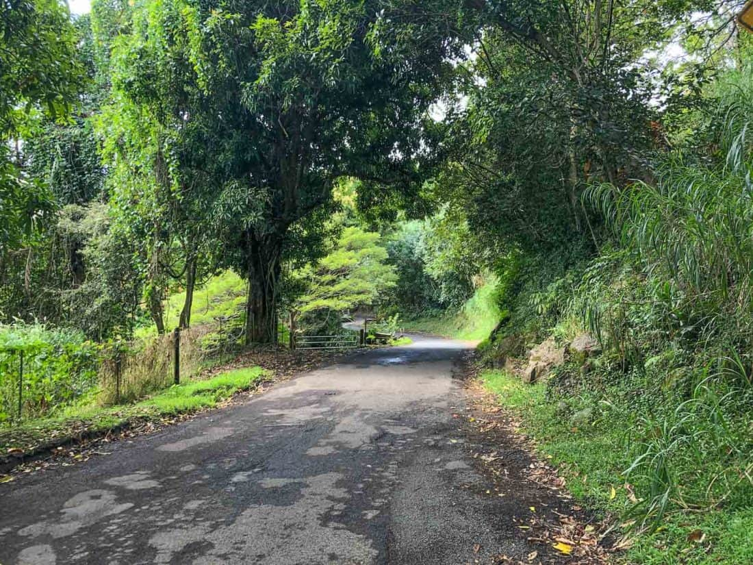 A section of the Road to Hana between Hana and Oheo Gulch