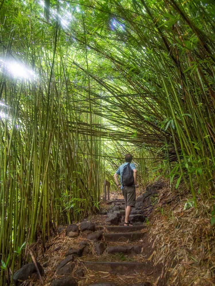 The bamboo forest on the Pipiwai Trail is one of the best Road to Hana stops in Maui