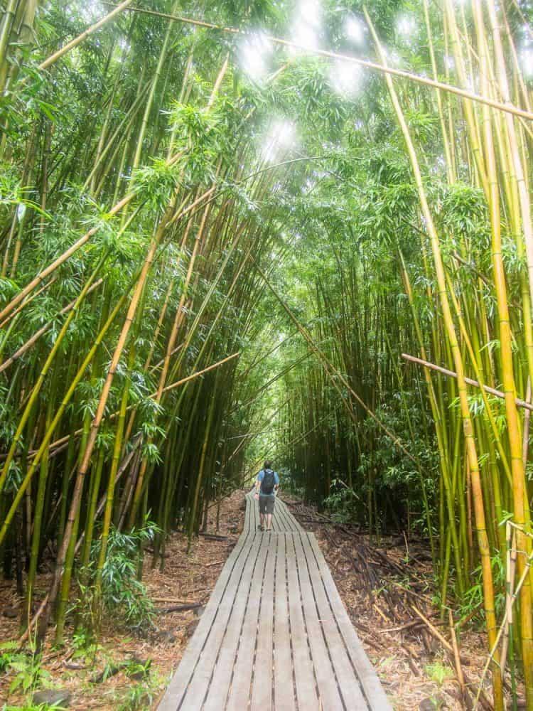 Bamboo grove on the Pipiwai Trail near Hana, Maui