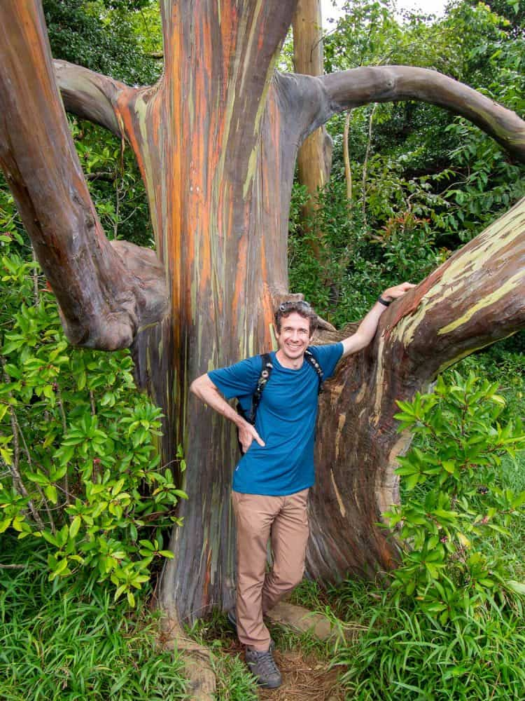 Simon standing by a rainbow eucalyptus tree on the Road to Hana in Maui