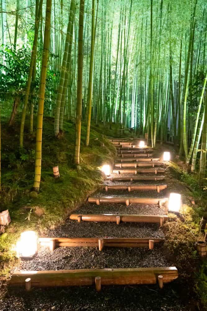 Bamboo forest at Kodai-ji temple in Kyoto on a rainy night