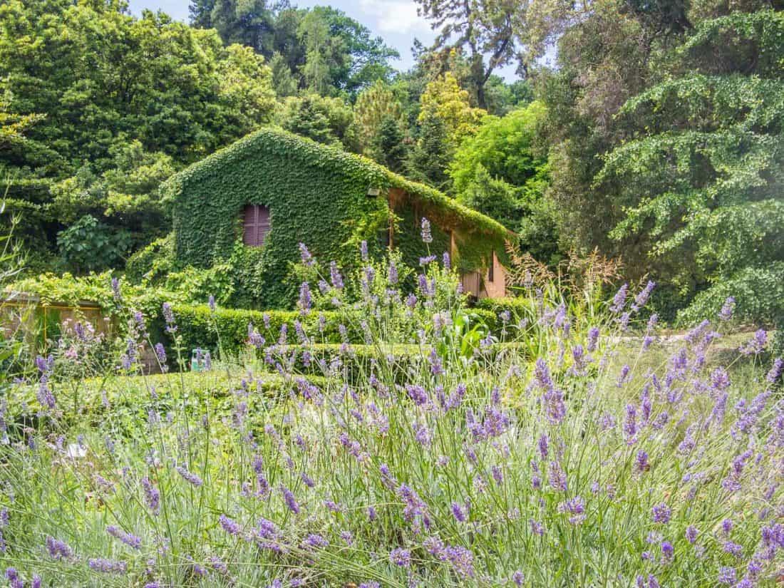 Medicinal garden in the Orto Botanico in Trastevere, Rome