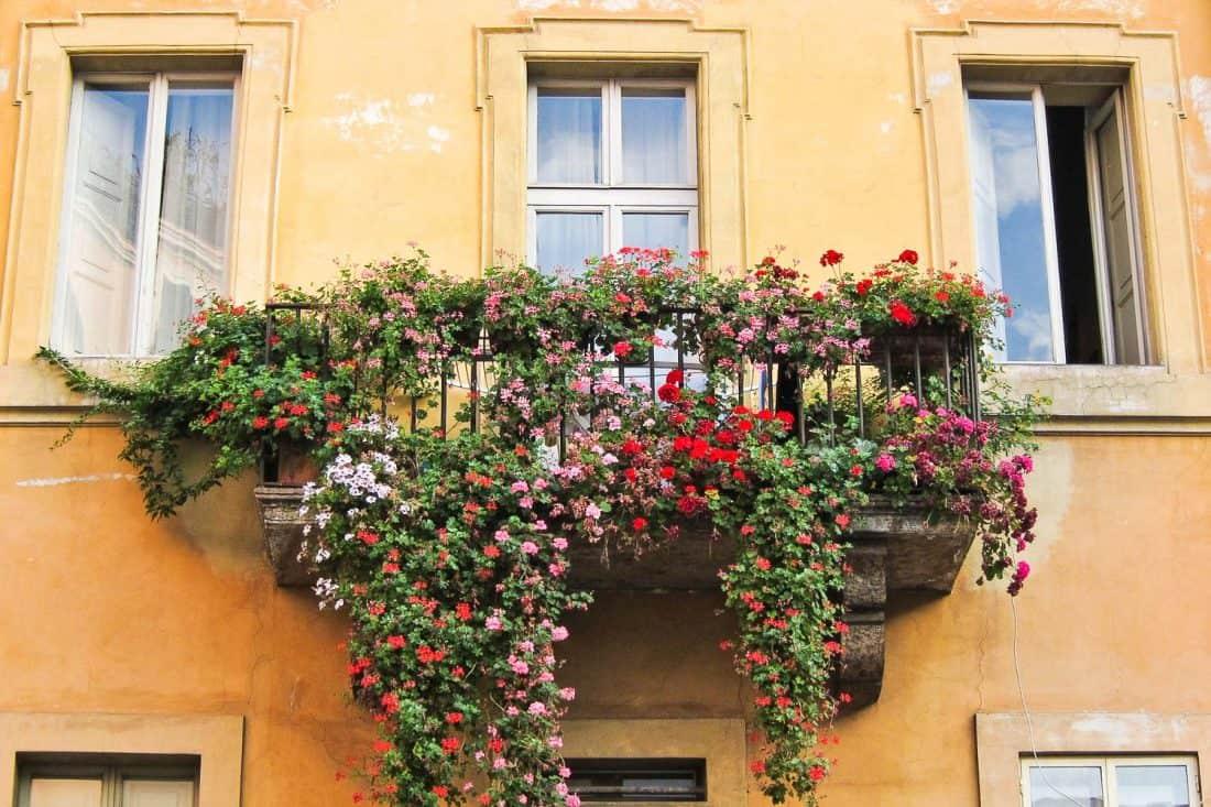 Flowers on a balcony in Trastevere, Rome