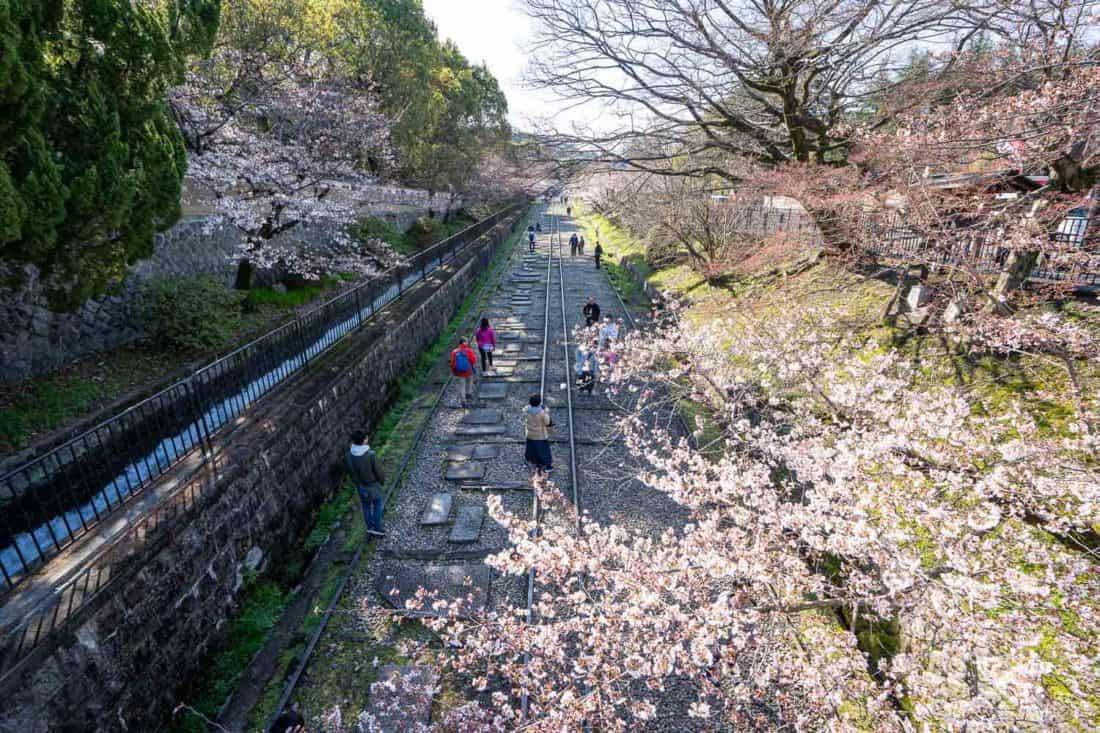 KeageIncline, a popular sakura spot in Kyoto