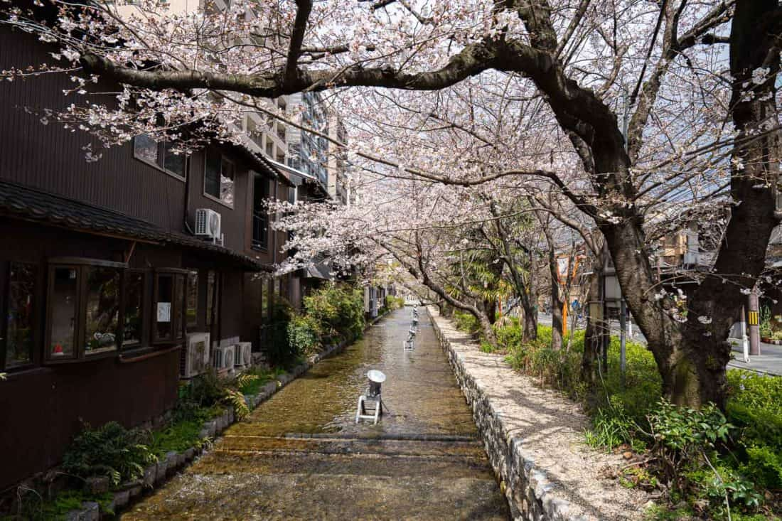 Cherry blossoms along Takase River in Kyoto